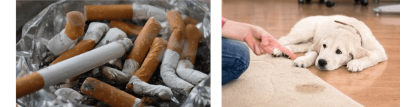 Geruchsneutralisierer Zigarettengestank und Tiergeruch in der Wohnung wie beseitigen